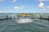 网箱养殖发联手展趋势分析海洋踏板合塑�厂家价格