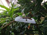 新型可调节塑料果树拉枝器