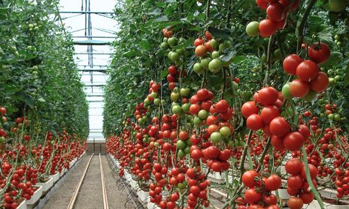 巴斯夫新型光和热稳定剂被应用于高端农业塑料